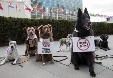 狗狗齊說不   永久反對動物測試